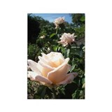 Rose Garden Rectangle Magnet