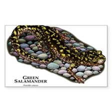 Green Salamander Decal