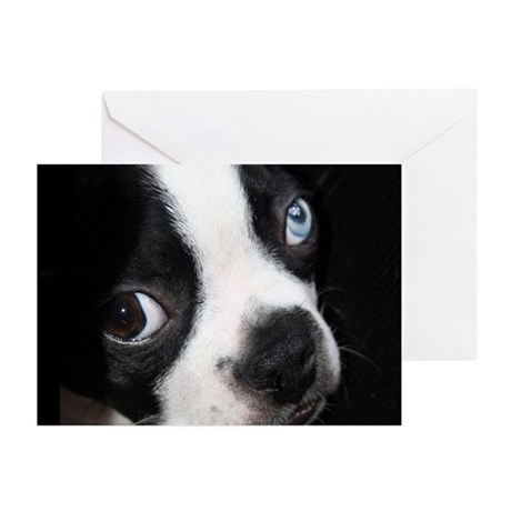 BLUE EYED BOSTON TERRIER Greeting Cards (Pk of 20)
