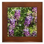 California Lupine Framed Tile