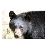 brown ear bear Postcards (Package of 8)