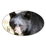 brown ear bear Oval Decal