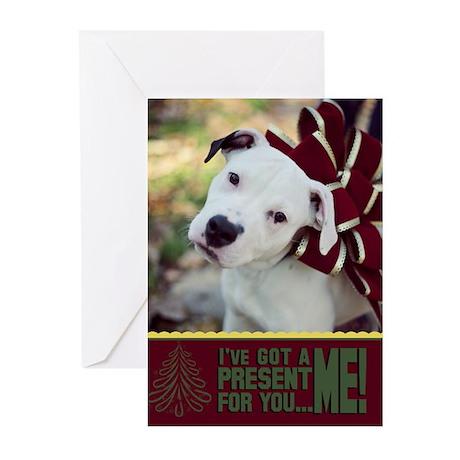 StubbyDog Present Greeting Cards (Pk of 20)
