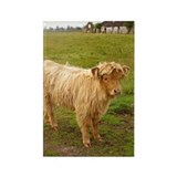 Heilan Coo (Highland cow) Rectangle Magnet