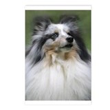 Cute Shetland sheepdog Postcards (Package of 8)