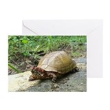 Three-toed Box Turtle Greeting Cards (Pk of 10)