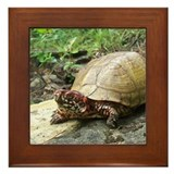 Three-toed Box Turtle Framed Tile