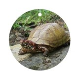 Three-toed Box Turtle Ornament (Round)