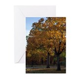 Mannford Oaks Greeting Cards (Pk of 10)