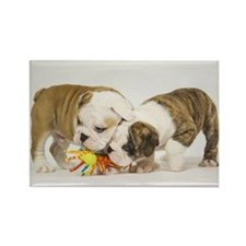BULLDOG PUPPIES PLAYING Rectangle Magnet