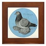 Frillback Pigeon Grizzle Framed Tile