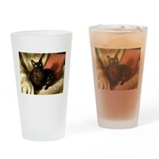 2 Brown Burmese on chair - Drinking Glass