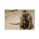 Baboon with Baby Rectangle Magnet
