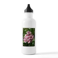 Sweet Williams Water Bottle