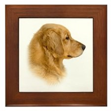 Golden Retriever Portrait Framed Tile