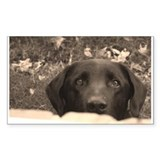 Black Labrador Rectangle Decal