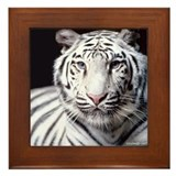 White Bengal Tiger Framed Tile