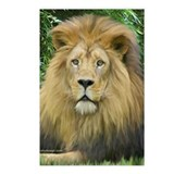Lion - close up Postcards (Package of 8)