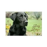 Dog Dayz 2012 Rectangle Magnet