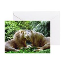 Affectionate Lions Greeting Cards (Pk of 10)