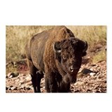 The Waterhole Postcards (Package of 8)