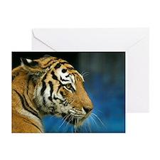 Tiger Sideways Photo Greeting Cards (Pk of 10)