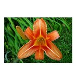 .orange daylily. Postcards (Package of 8)