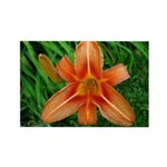 .orange daylily. Rectangle Magnet