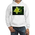 .pale yellow. Hooded Sweatshirt
