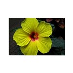 .yellow hibiscus. Rectangle Magnet (10 pack)