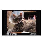 Life is Unfair (8 Sick Cat PostCards)