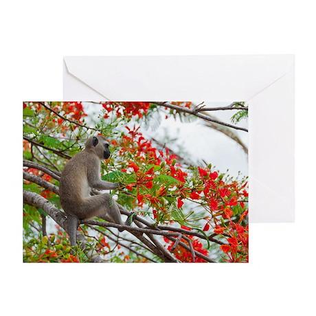 Vervet Greeting Card