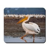 White Pelican Mousepad