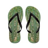 Flip Flops Cacti