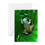 treefrog I Greeting Cards (Pk of 10)