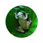 treefrog I 3.5