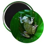 treefrog I Magnet