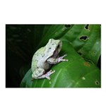 treefrog III Postcards (Package of 8)