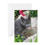.sarcasti-cat. Greeting Card