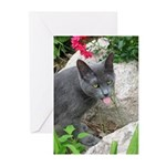 .sarcasti-cat. Greeting Cards (Pk of 10)