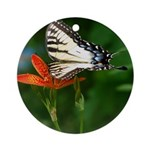 .swallowtail on candy lily. Ornament (Round)