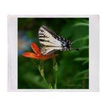.swallowtail on candy lily. Throw Blanket