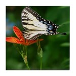 .swallowtail on candy lily. Tile Coaster
