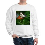 .swallowtail on candy lily. Sweatshirt