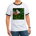 .swallowtail on candy lily. Ringer T