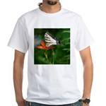 .swallowtail on candy lily. White T-Shirt