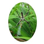 .garden spider. Ornament (Oval)