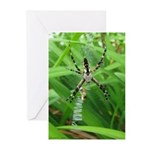 .garden spider. Greeting Cards (Pk of 10)