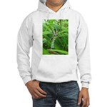 .garden spider. Hooded Sweatshirt