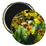 .yellow oncidium. Magnet